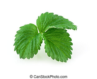 Leaves of strawberry isolated on white backgrond