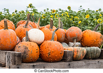 Cart of Pumpkins With Sunflowers