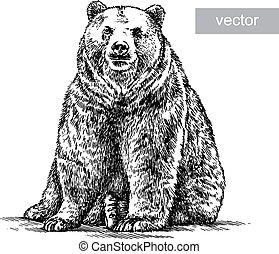 engrave bear illustration - engrave isolated vector bear...