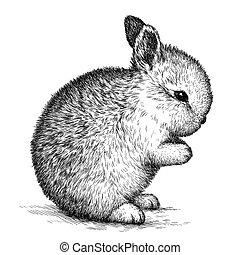 engrave rabbit illustration - engrave isolated rabbit...