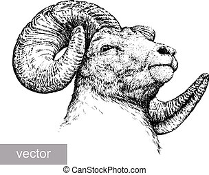 engrave isolated sheep illustration - engrave isolated...