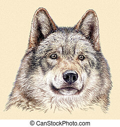 engrave wolf illustration - engrave isolated wolf...