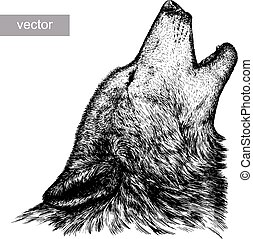 engrave wolf illustration - engrave isolated vector wolf...