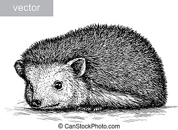 engrave hedgehog illustration - engrave isolated hedgehog...