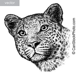 engrave leopard illustration - engrave isolated vector...