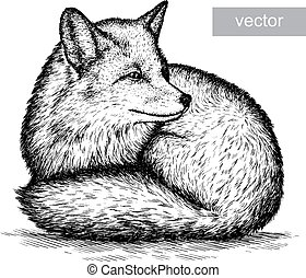 engrave fox illustration - engrave isolated fox vector...