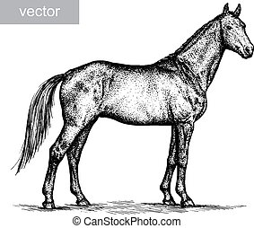 engrave horse illustration - engrave isolated horse vector...