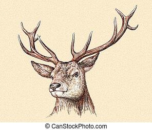 engrave deer illustration - engrave isolated deer...