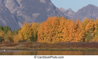 Oxbow Bend in Fall Zoom Out - zoom out of an autumn...