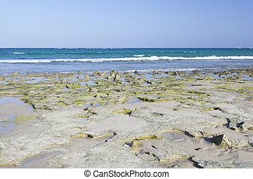 Diani Beach, Kenya - Algae covered coral blocks at Diani...