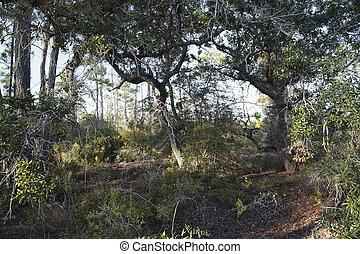 Wild Florida Ecosystem - A favorite spot among birdwatchers...