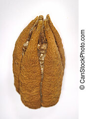 Ceiba tree seed isolated - Detail of cuban ceiba tree seed...