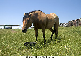 Horse on Ranch