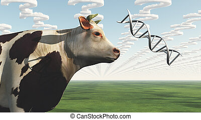 GMO Cow Question