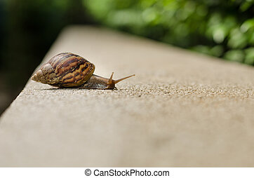 The journey of snails