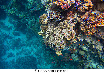 colorful coral reef and deep blue sea in egypt...