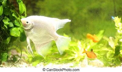 fish in an aquarium close-up