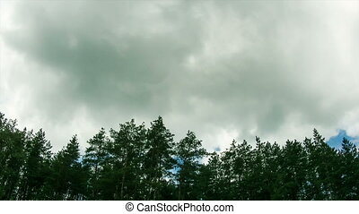 Clouds in the sky moving above the trees. - Above the tall...