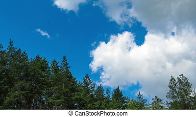 Clouds in the sky moving above the trees.