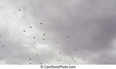 Birds in a Stormy Sky - Many birds on background cloudy sky...
