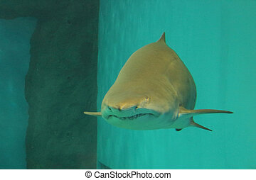 Aquarium shark - Creative design of Aquarium shark