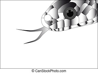 snake - a vector of the head of a snake