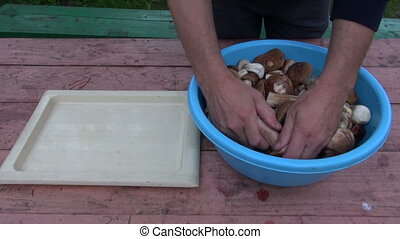 Man washing boletus edulis in blue plastic bowl and placing...