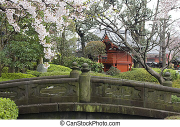 Cherry blossom in Japanese garden - Sakura blossom in...