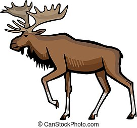 Bull moose - vector illustration of a male moose