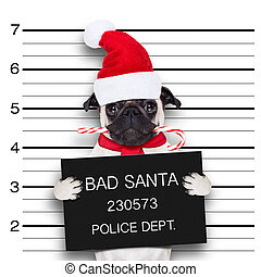 mugshot santa dog - pug dog as santa claus for christmas...