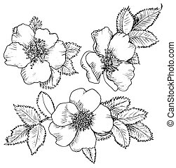 dogrose hand drawn flowers