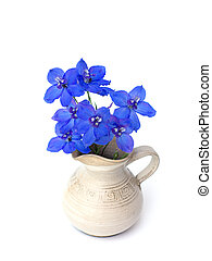 Delphinium BELLADONNA GROUP - blue delphinium on a white...