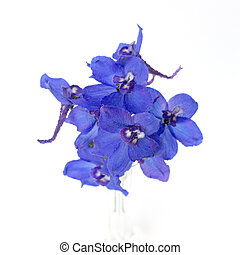 Delphinium (BELLADONNA GROUP) - blue delphinium on a white...