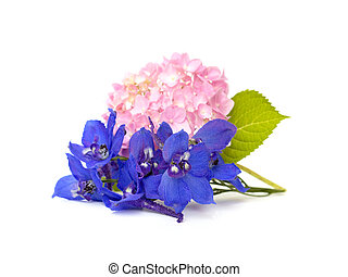 Delphinium BELLADONNA GROUP - blue delphinium and hydrangea...