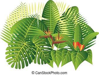 Tropical Jungle Plants Illustration