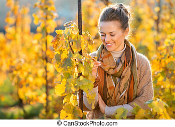 Woman winegrower inspecting vines in vineyard outdoors in...
