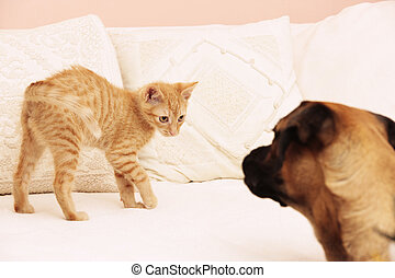 cat and dog playing - orange cat and dog playing and...