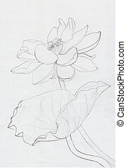Lotus flower line art ink pen drawing Original style