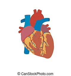 human heart concept, medical, healthcare, flat style, vector...