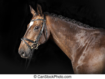 Hungarian Warmblood - Brown Hungarian Warmblood horse with...