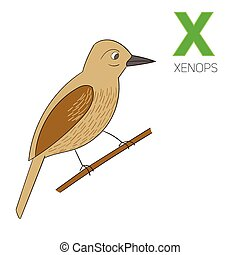 Alphabet letter X xenops children vector