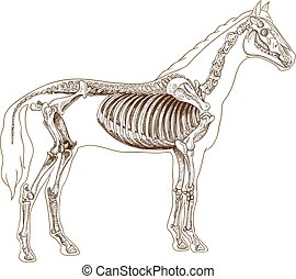 engraving skeleton of horse - Vector engraving illustration...