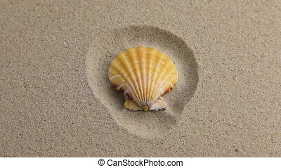 Approximation of sea shell lying on the sand, top view