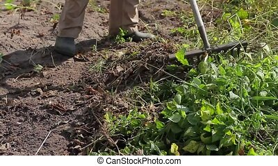 Farmer cleans a vegetable garden Man removes weeds with a...