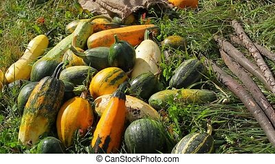 Harvest lying on the grass Farmers gathered a good harvest...