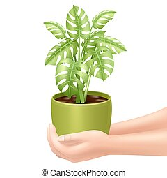 Holding A Houseplant Illustration - Woman holding a...
