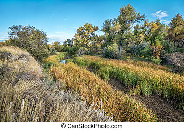 swamp and riparian forest in eastern Colorado - old river...
