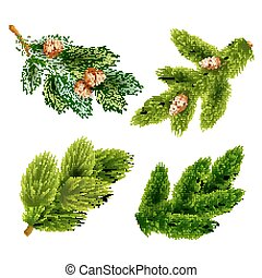 Fir and pine trees branches icons set - Pine tree branches...