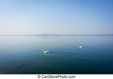 Couple of white swans swiminng on quiet lake, haze morning