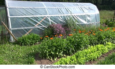 Herb and vegetable garden with a greenhouse on sunny day in...